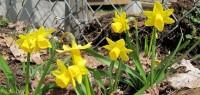 Garden Tidy Flowers